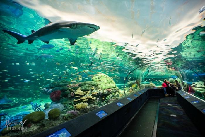 que faire à toronto aquarium