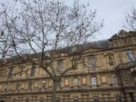 handkerchief tree by the seine
