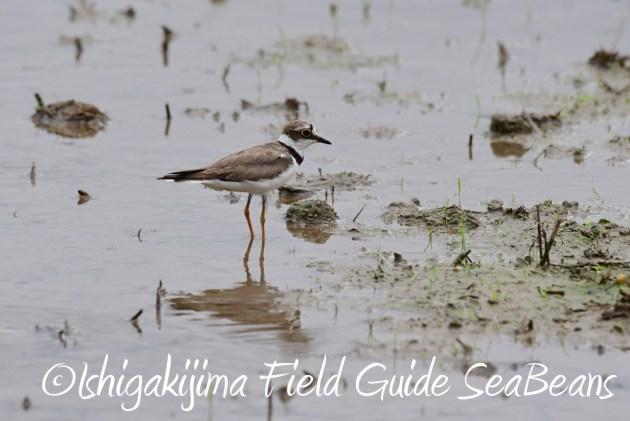 7.18 バードウオッチング 野鳥撮影 ガイド 2