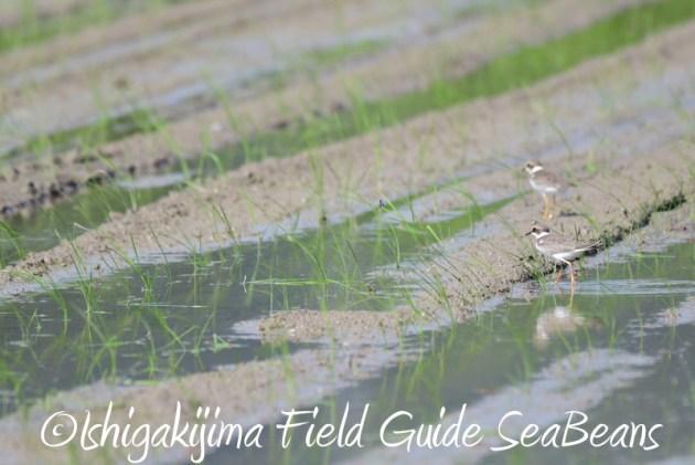 8月4日鳥獣保護区域等巡回調査6
