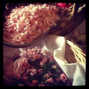 Roses and petals