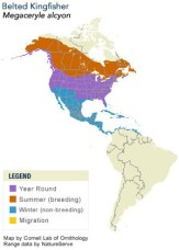 Range Map of Belted Kingfisher - Cornell Lab of Ornithology