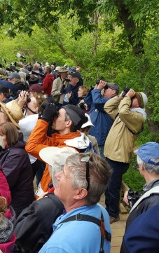 Magee Marsh birders - Ed Konrad
