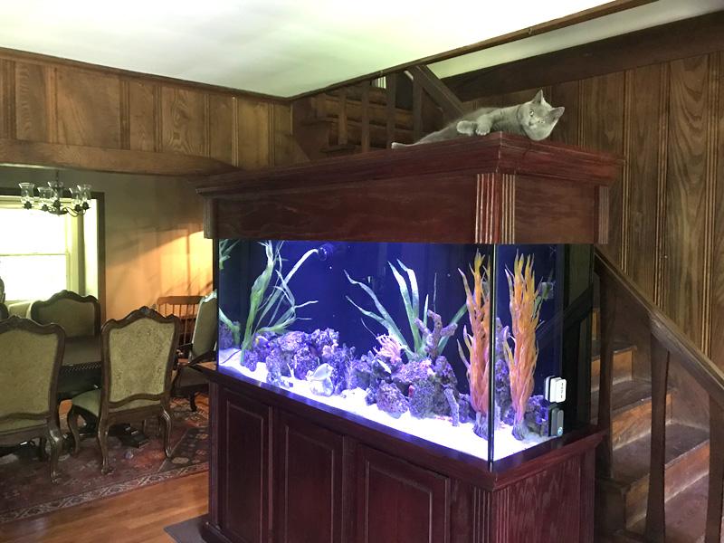 Corner Bow Front Aquarium