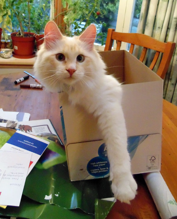 6-month-old Caesar helps the family pack for a move, 16 Mar 2013