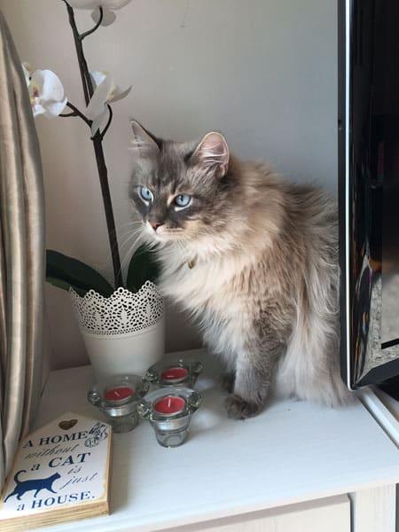 Stoli, just looking handsome, June 2016