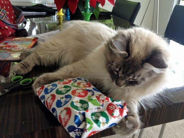 Siberian cat Stoli, helping wrap Christmas presents