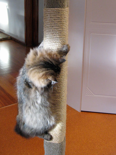 Sisal on a cat scratching post