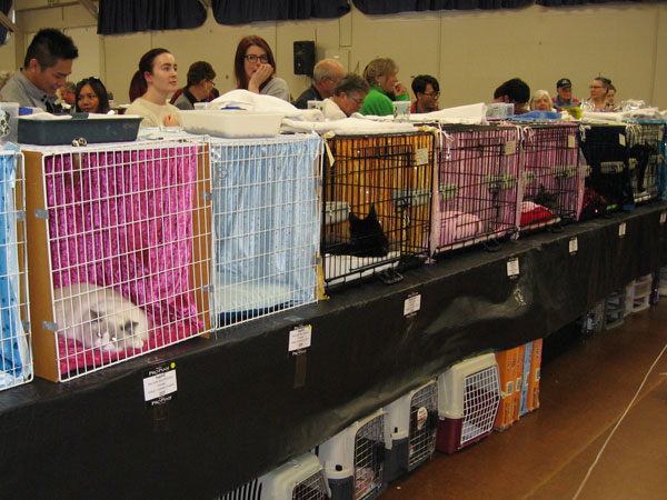National cat show, Palmerston North, 1 May 2016