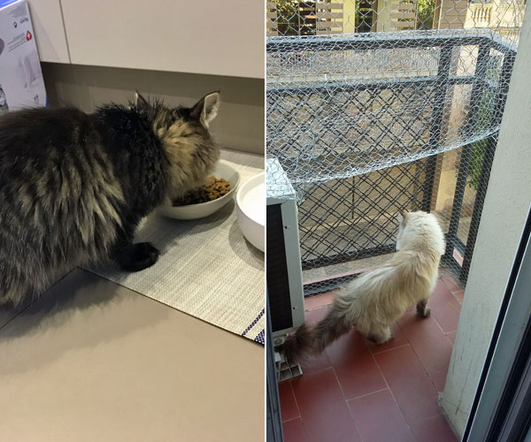 L: Suki samples the menu at her home home in Sydney. R: Beth gets some fresh air on her cat-proof balcony in Barcelona.
