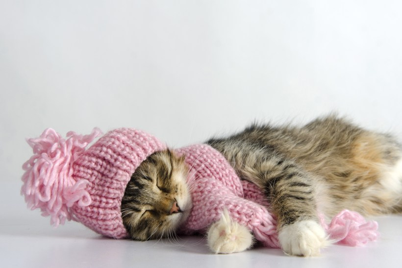 kitty napping.jpg
