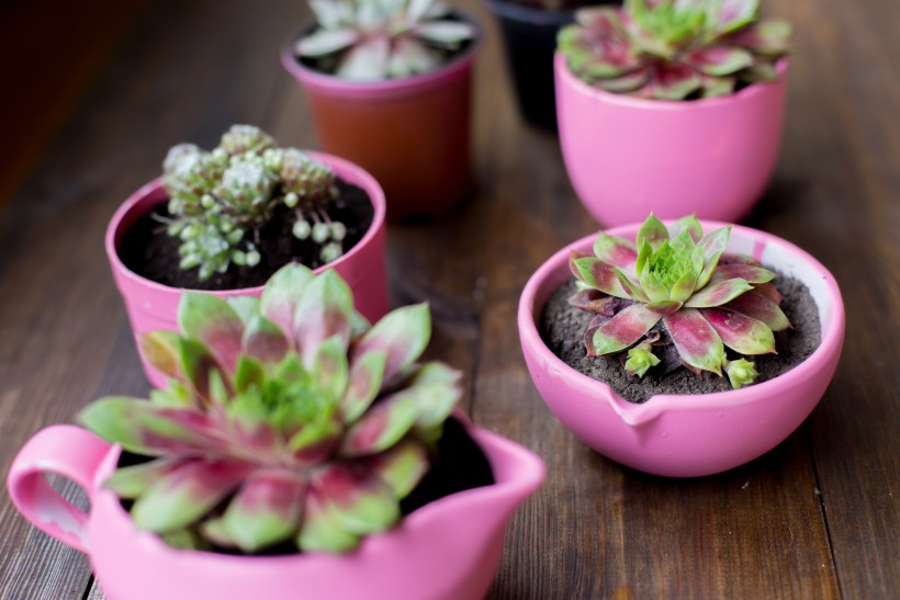 potted plants.jpg