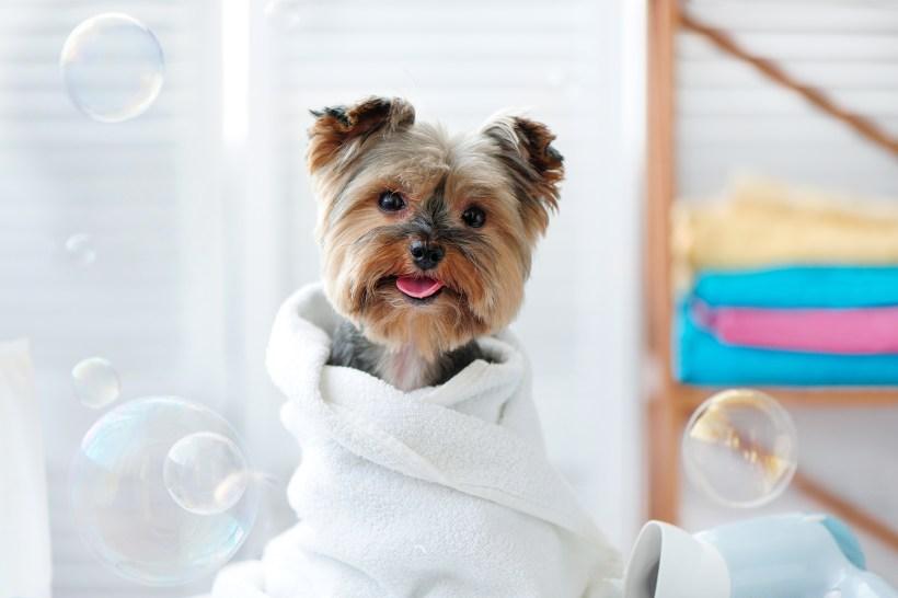 pet bath.jpg