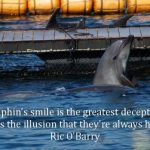 Learn: A captured dolphin - A Dolphins smile is the greatest deception. It creates the illusion that they are always happy""