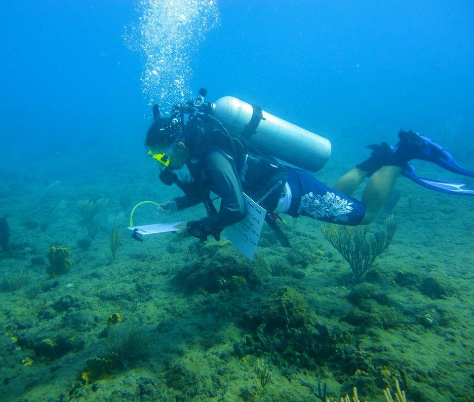 Scuba diver on a coral conservation survey underwater.