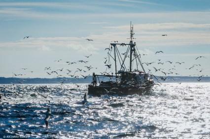A days fishing, Blyth