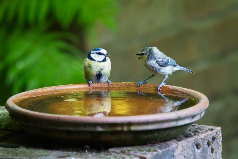 conversation, talk, bird