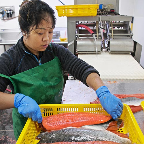 woman processing a salmon fillet