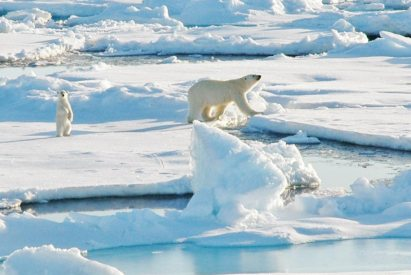 A polar bear and cub walking on sea ice