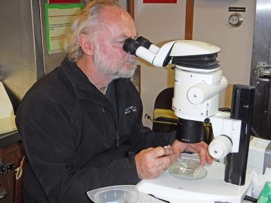 man looks into microscope