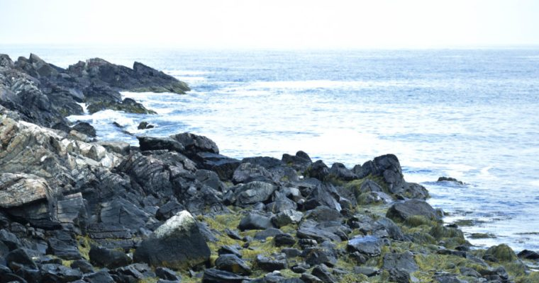 Marginal Way–Fun Things To Do In Maine!