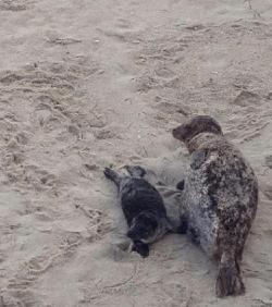 Pup Ocean Blue