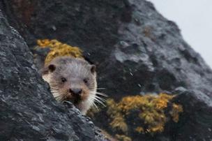 otter-spot
