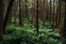 Tillamook State Forest Oregon