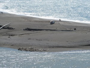 Sea lions sunning