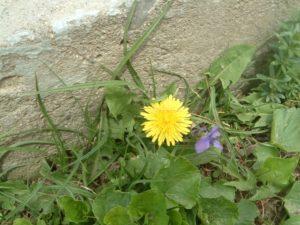 flowers-foundation