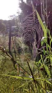 spider_web_quietude