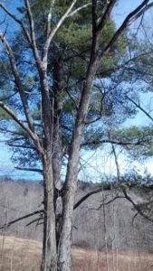 tree_in_april