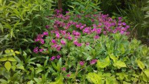 bursting_flowers