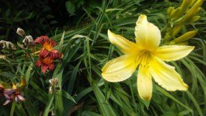 life_death_flowers