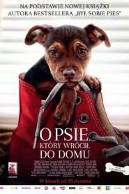 O psie, który wrócił do domu cały film online pl