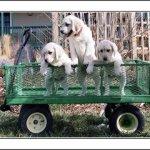 Puppies, puppies, puppies!