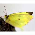 Just Fluttering