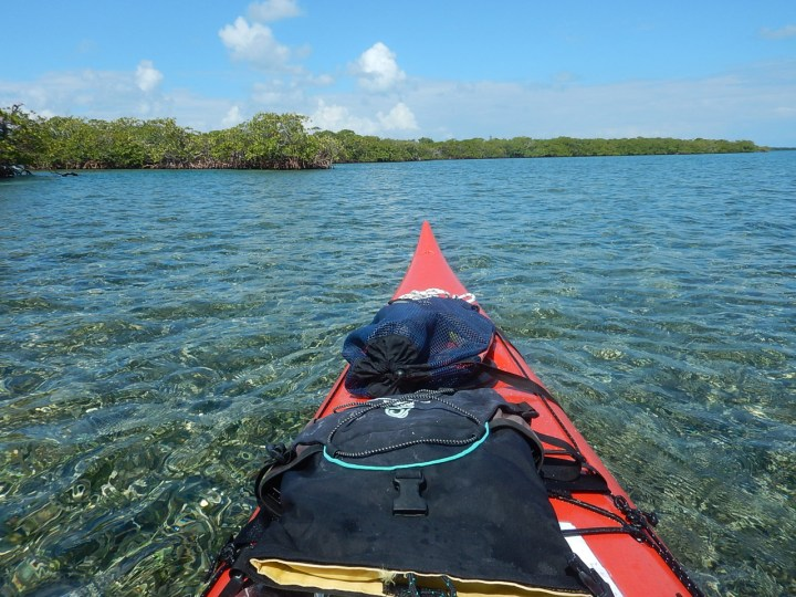 Mangroves in Belize