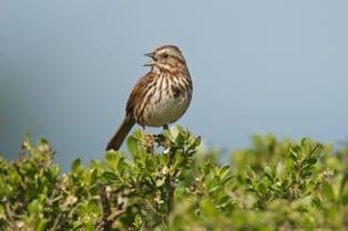 bird watching, sea ranch