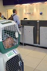 dog friendly, traveling with dog,