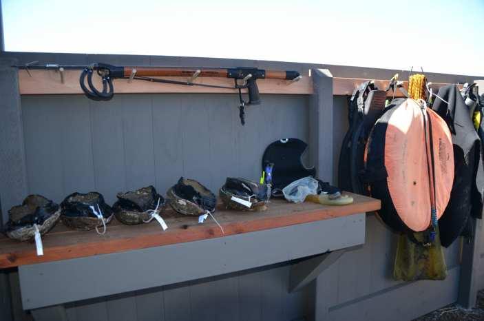 fishing, diving, Abalone Bay, Sea Ranch, Vacation Rental