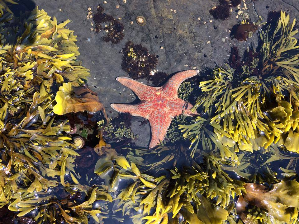 Sea Ranch tide pools , kid friendly ,Sea Ranch, Abalone Bay, oceanfront, vacation rental, tides, tide pools