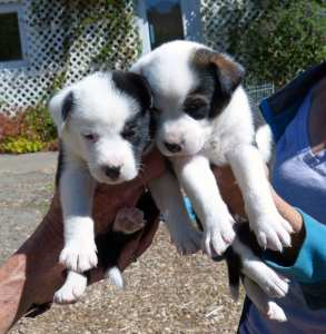 National Dog Day, Dog Day, Abalone Bay, Sea Ranch, Redwood Coast Humane Society