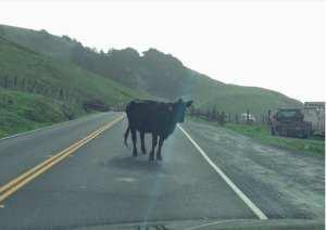 sea ranch road trip,sea ranch rentals road trip,sea ranch rentals ,road trip