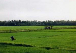 ホイアンの田園風景