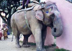 パタンの象