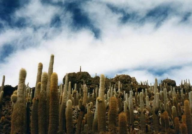 ボリビア ウユニ
