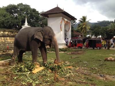 キャンディ、仏歯寺の象【スリランカ】