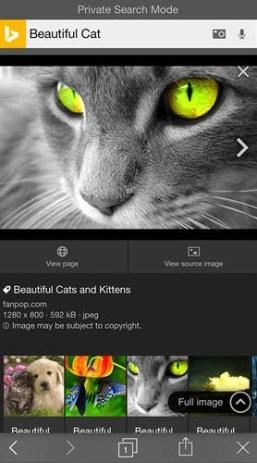 Bing privacy search mode BeautifulCat2