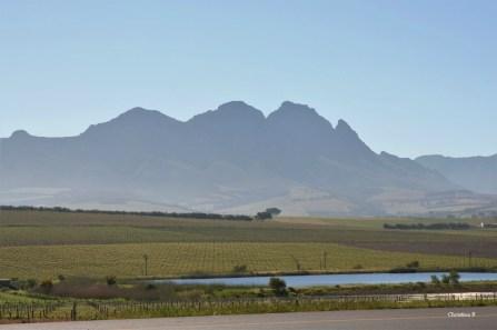 Simonsberg and some vineyards in spring